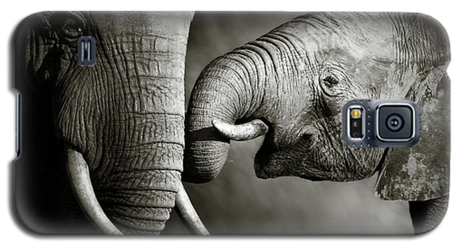 Elephant; Interact; Touch; Gently; Trunk; Young; Large; Small; Big; Tusk; Together; Togetherness; Passionate; Affectionate; Behavior; Art; Artistic; Black; White; B&w; Monochrome; Image; African; Animal; Wildlife; Wild; Mammal; Animal; Two; Moody; Outdoor; Nature; Africa; Nobody; Photograph; Addo; National; Park; Loxodonta; Africana; Muddy; Caring; Passion; Affection; Show; Display; Reach Galaxy S5 Case featuring the photograph Elephant Affection by Johan Swanepoel