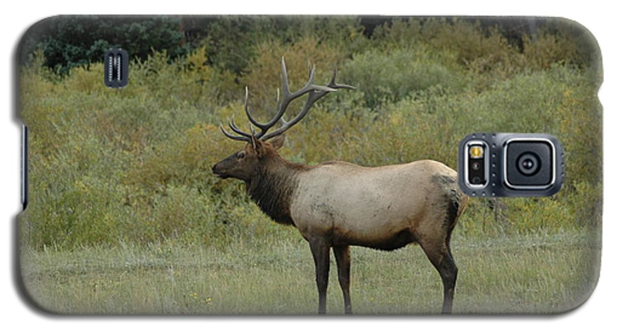 Elk Galaxy S5 Case featuring the photograph Elk by Kathy Schumann