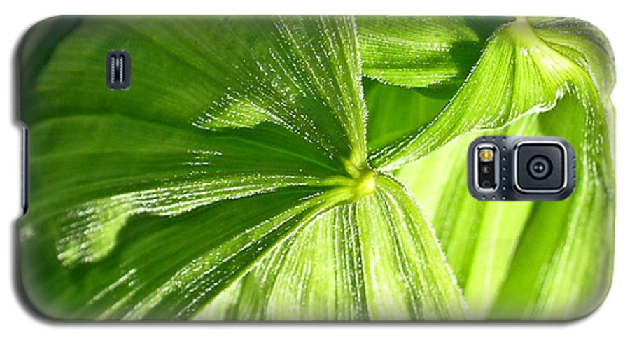 Plant Galaxy S5 Case featuring the photograph Emerging Plants by Douglas Barnett