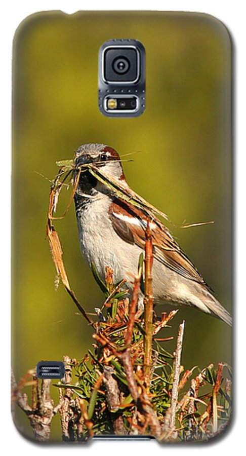 Sparrow Galaxy S5 Case featuring the photograph English Sparrow Bringing Material To Build Nest by Max Allen