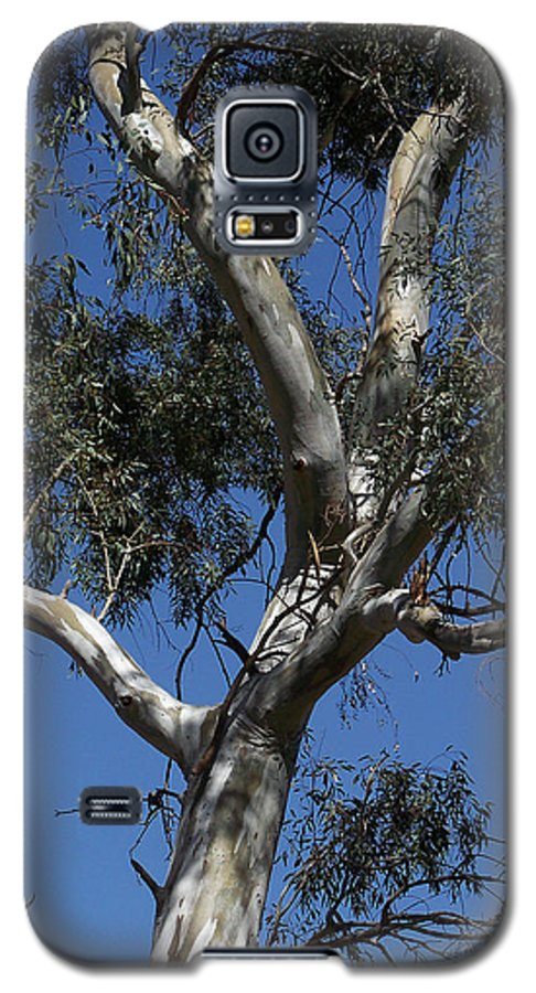 Trees Galaxy S5 Case featuring the photograph Eucalyptus by Kathy McClure