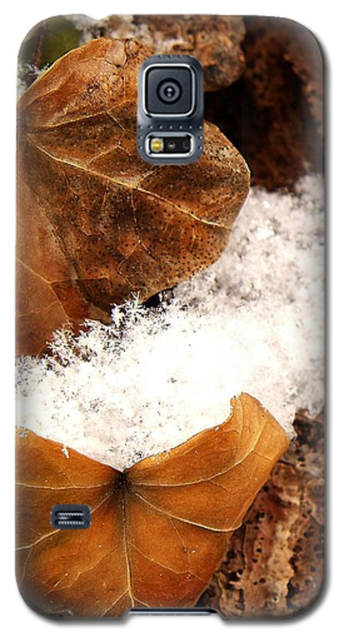 Fall Galaxy S5 Case featuring the photograph Fall And Winter by Gaby Swanson