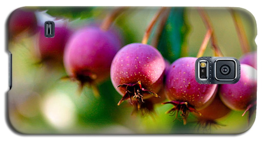 Berry Galaxy S5 Case featuring the photograph Fall Berries by Marilyn Hunt
