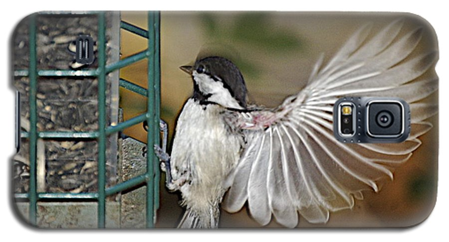 Chickadee In Flight Galaxy S5 Case featuring the photograph Fan Dance by Faith Harron Boudreau