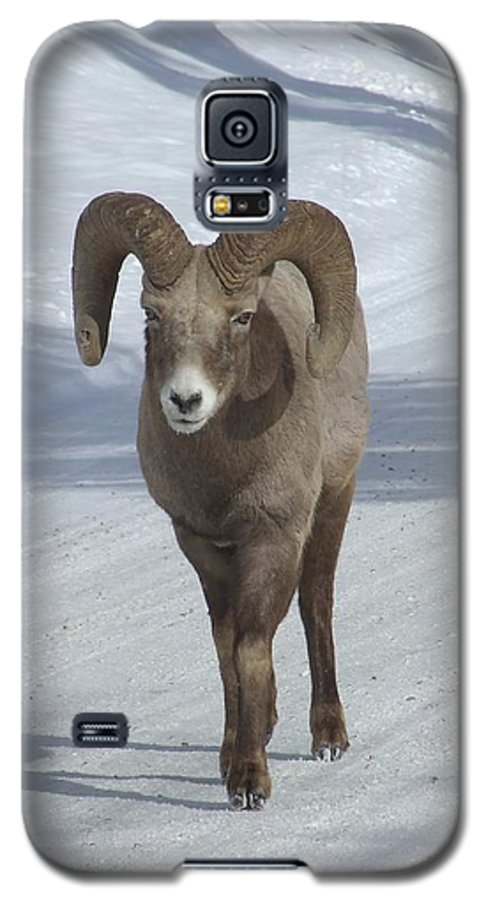 Bighorn Sheep Galaxy S5 Case featuring the photograph Farewell To The King by Tiffany Vest