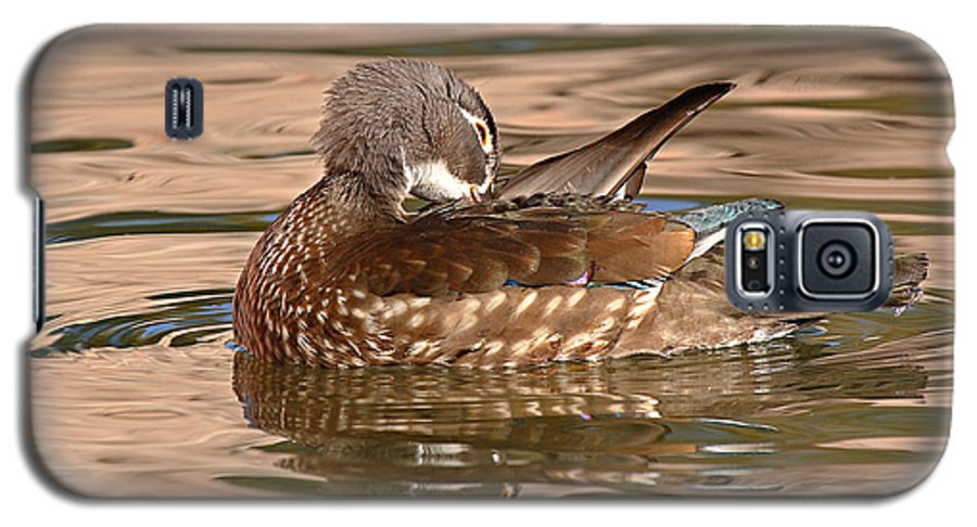 Wood Duck Galaxy S5 Case featuring the photograph Female Wood Duck Preening On The Water by Max Allen