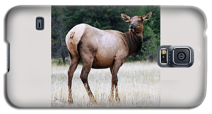 Elk Galaxy S5 Case featuring the photograph Feme Elk by Tiffany Vest