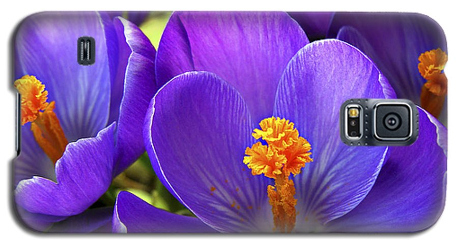 Flower Galaxy S5 Case featuring the photograph First Crocus by Marilyn Hunt