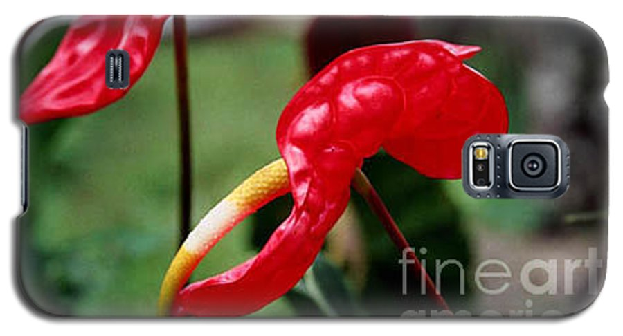 Exotic Flowers Galaxy S5 Case featuring the photograph Flamingo Flower by Kathy McClure
