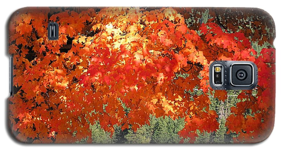 Autumn Photographs Galaxy S5 Case featuring the photograph Flickering Sunlight by Louise Magno