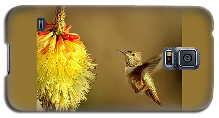 Hummingbird Galaxy S5 Case featuring the photograph Flight Of The Hummer by Mike Dawson