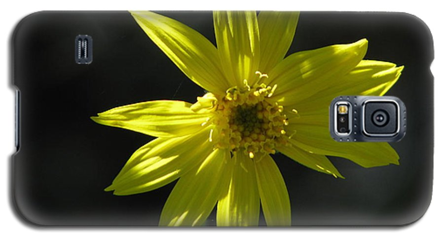 Light Galaxy S5 Case featuring the photograph Floral by Amanda Barcon