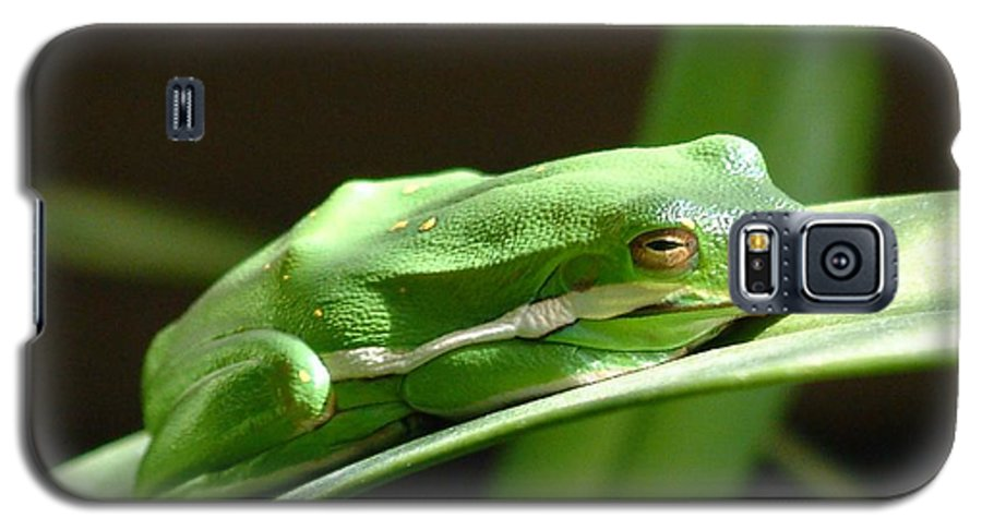 Frog Galaxy S5 Case featuring the photograph Florida Tree Frog by Ned Stacey