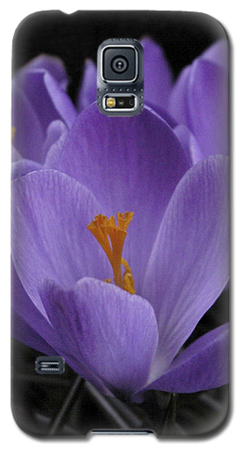 Flowers Galaxy S5 Case featuring the photograph Flower Crocus by Nancy Griswold