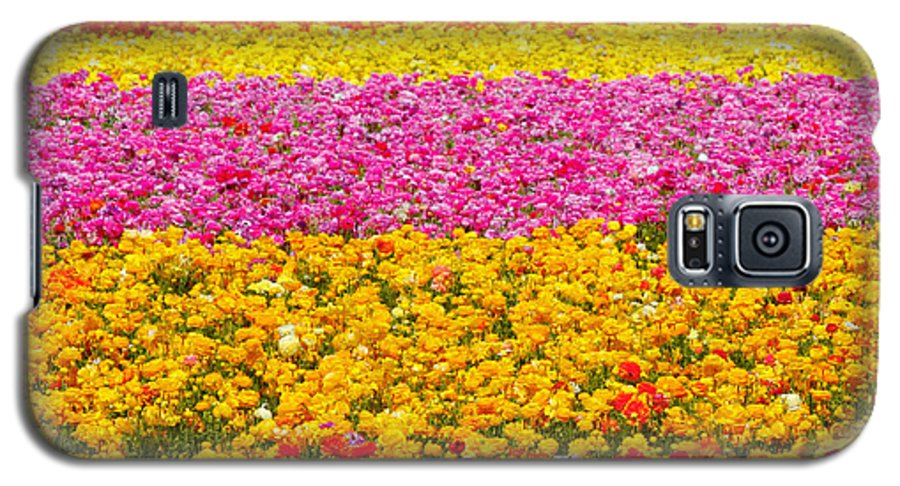Flower Galaxy S5 Case featuring the photograph Flower Fields Carlsbad Ca Giant Ranunculus by Christine Till
