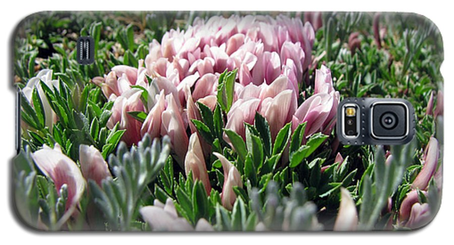 Flowers Galaxy S5 Case featuring the photograph Flowers In The Alpine Tundra by Amanda Barcon