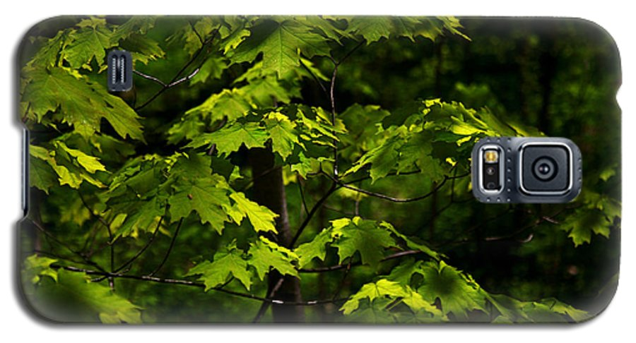 Forest Galaxy S5 Case featuring the photograph Forest Shades by Randy Oberg