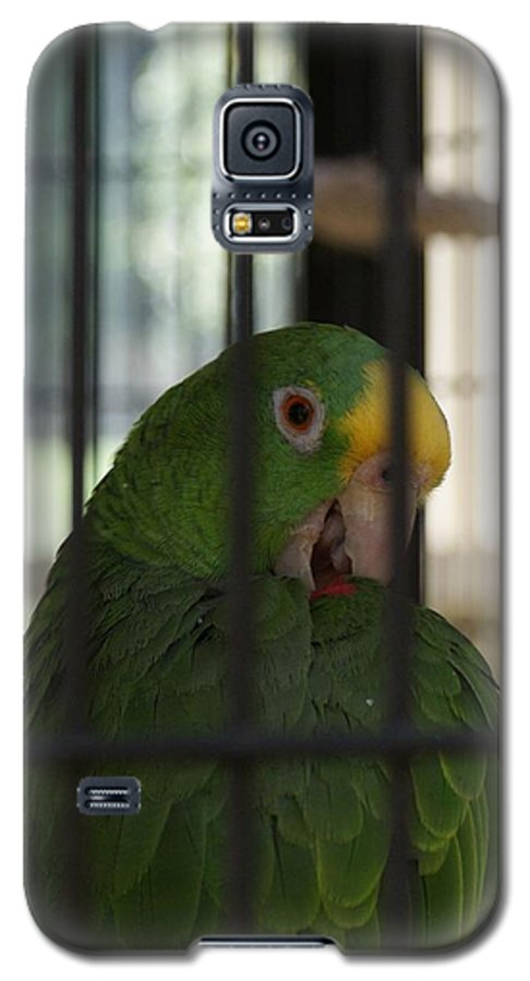 Parrot Galaxy S5 Case featuring the photograph Framed by Shelley Jones