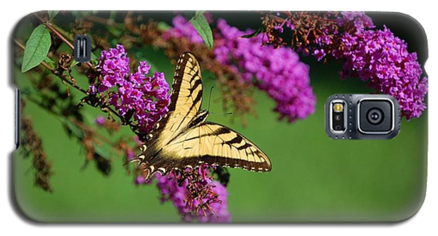 Butterfly Galaxy S5 Case featuring the photograph Freedom by Debbi Granruth