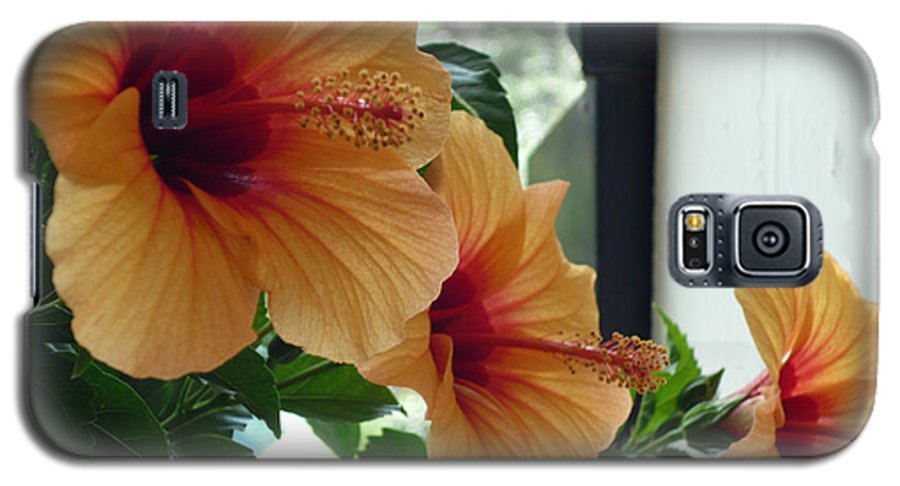 Photography Flower Floral Bloom Hibiscus Peach Galaxy S5 Case featuring the photograph Friends For A Day by Karin Dawn Kelshall- Best