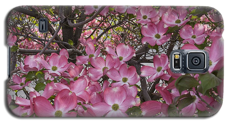 Dogwood Galaxy S5 Case featuring the photograph Full Bloom by Idaho Scenic Images Linda Lantzy