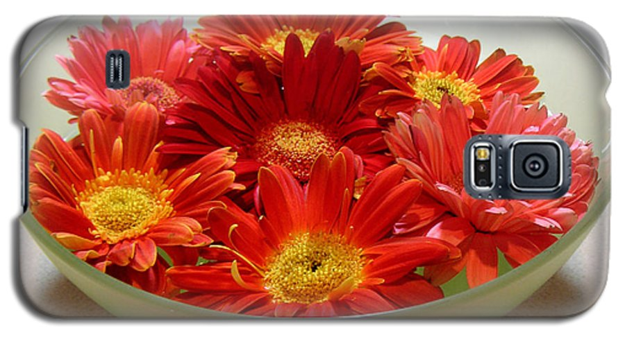 Nature Galaxy S5 Case featuring the photograph Gerbera Daisies - A Bowl Full by Lucyna A M Green