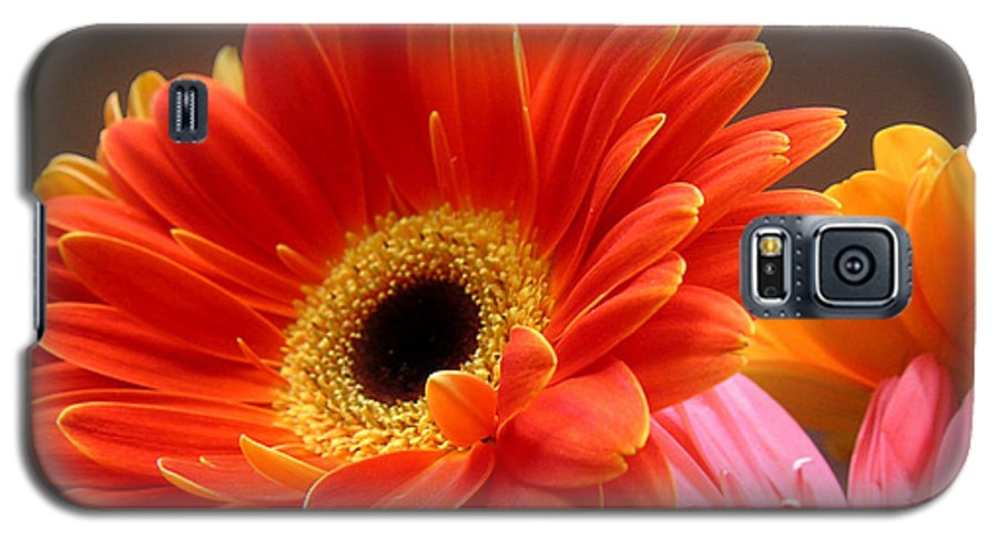 Nature Galaxy S5 Case featuring the photograph Gerbera Daisies - Luminous by Lucyna A M Green