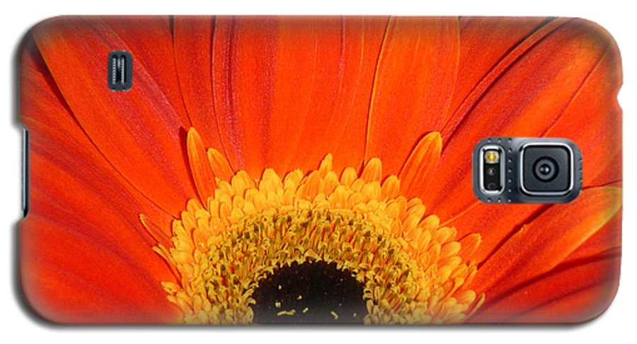 Nature Galaxy S5 Case featuring the photograph Gerbera Daisy - Glowing In The Dark by Lucyna A M Green