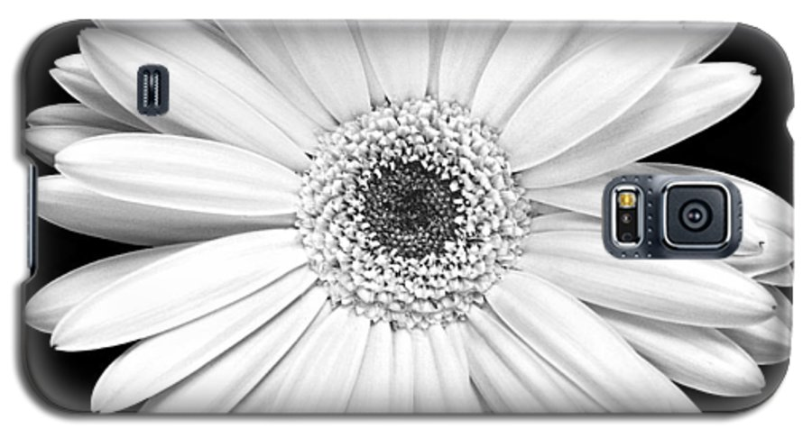 Gerber Galaxy S5 Case featuring the photograph Single Gerbera Daisy by Marilyn Hunt