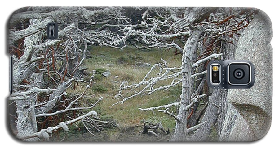 Lichens Galaxy S5 Case featuring the photograph Ghost Trees by Douglas Barnett