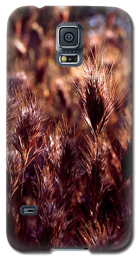 Nature Galaxy S5 Case featuring the photograph Gideon by Randy Oberg