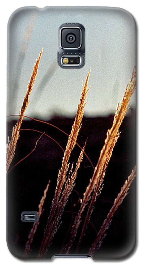 Grass Galaxy S5 Case featuring the photograph Glistening Grass by Randy Oberg