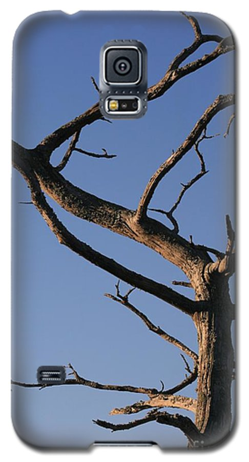 Tree Galaxy S5 Case featuring the photograph Gnarly Tree by Nadine Rippelmeyer
