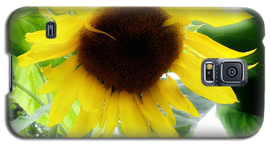 Sunflower Galaxy S5 Case featuring the photograph Golden Beauty by Idaho Scenic Images Linda Lantzy