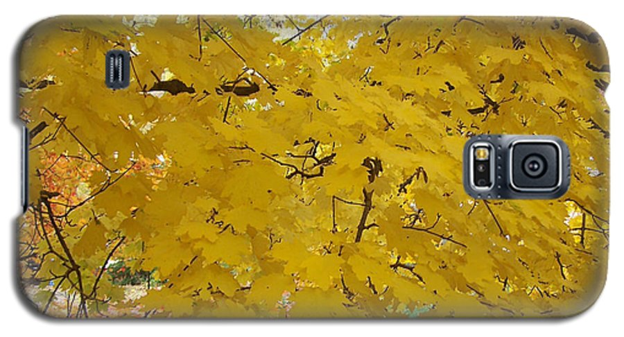 Fall Autum Trees Maple Yellow Galaxy S5 Case featuring the photograph Golden Canopy by Karin Dawn Kelshall- Best