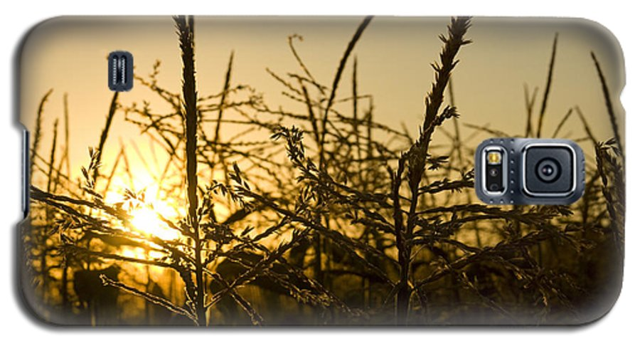 Golden Galaxy S5 Case featuring the photograph Golden Corn by Idaho Scenic Images Linda Lantzy