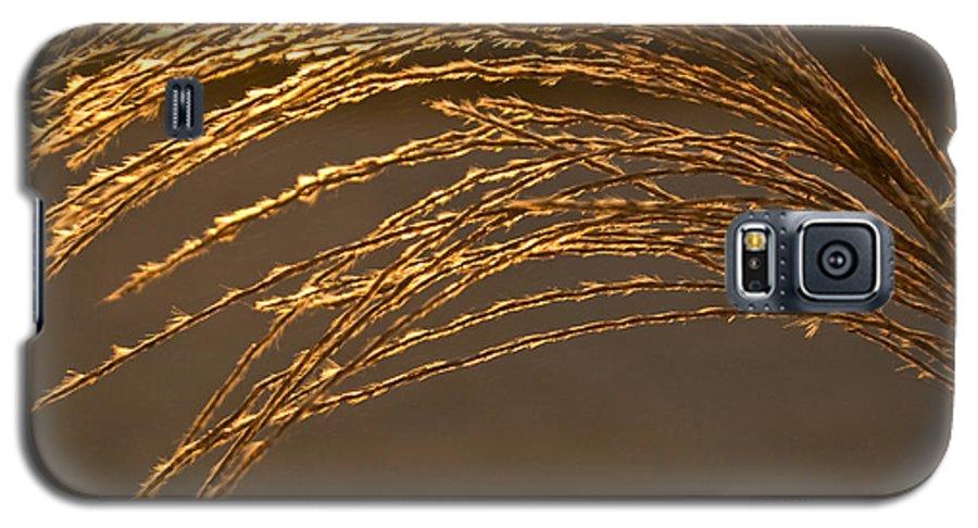 Grass Galaxy S5 Case featuring the photograph Golden Grass by Douglas Barnett
