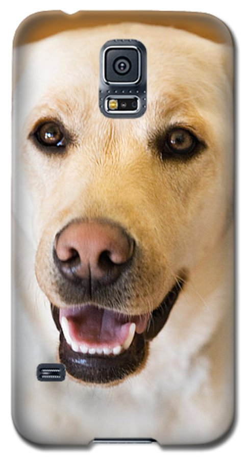 Lab Galaxy S5 Case featuring the photograph Golden Lab by Marilyn Hunt