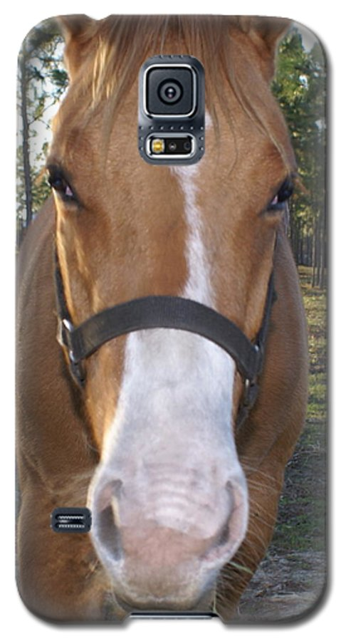 Horse Galaxy S5 Case featuring the painting Got Sugar by Debbie May
