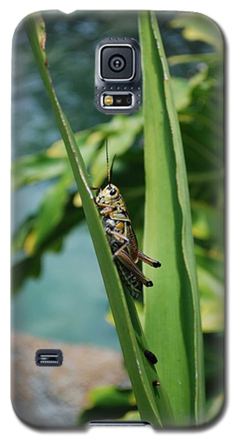Field Galaxy S5 Case featuring the photograph Grasshopper by Margaret Fortunato