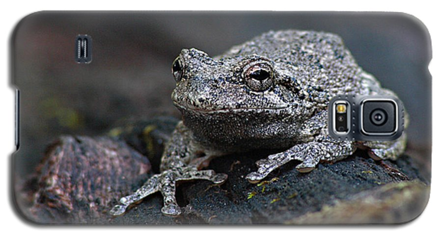 Frog Galaxy S5 Case featuring the photograph Gray Treefrog On A Log by Max Allen