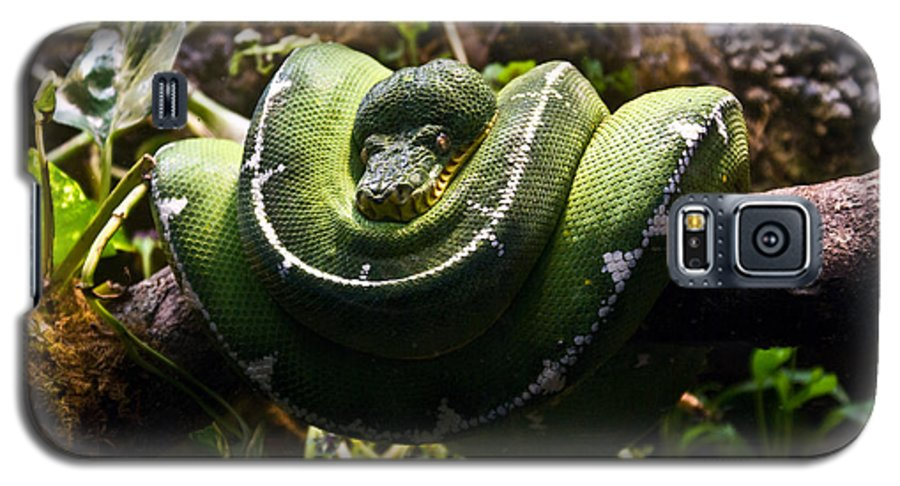 Green Galaxy S5 Case featuring the photograph Green Boa by Douglas Barnett
