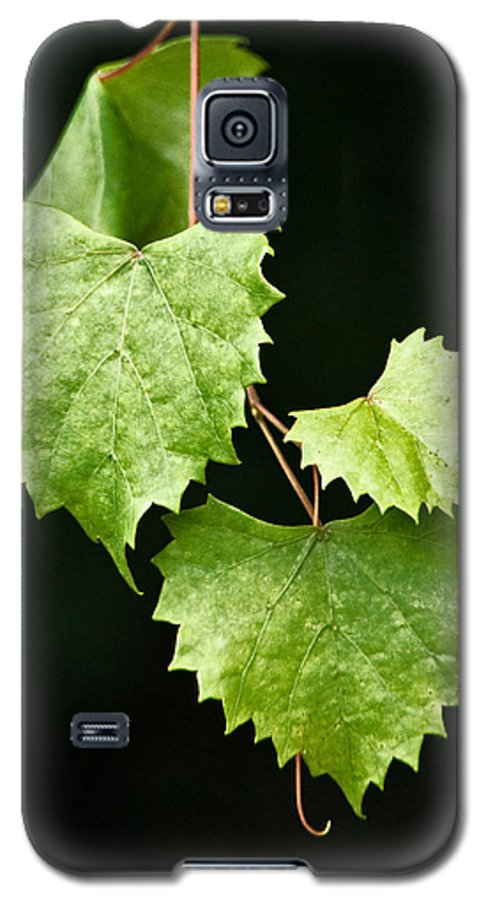 Flora Galaxy S5 Case featuring the photograph Green Leaves by Christopher Holmes