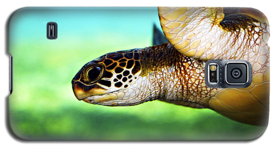 Green Galaxy S5 Case featuring the photograph Green Sea Turtle by Marilyn Hunt