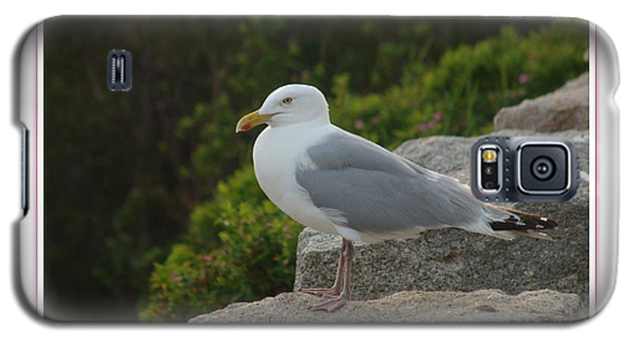 Landscape Galaxy S5 Case featuring the photograph Gull Able by Peter Muzyka