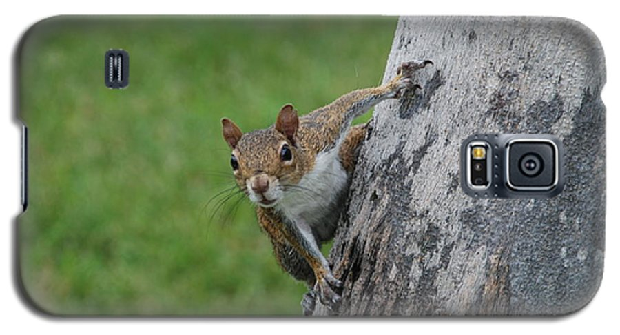 Squirrel Galaxy S5 Case featuring the photograph Hanging On by Rob Hans