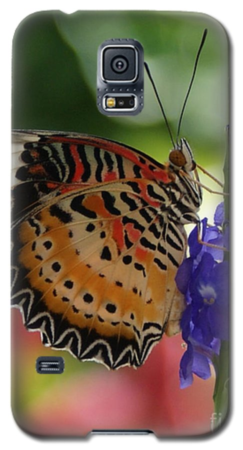 Butterfly Galaxy S5 Case featuring the photograph Hanging On by Shelley Jones