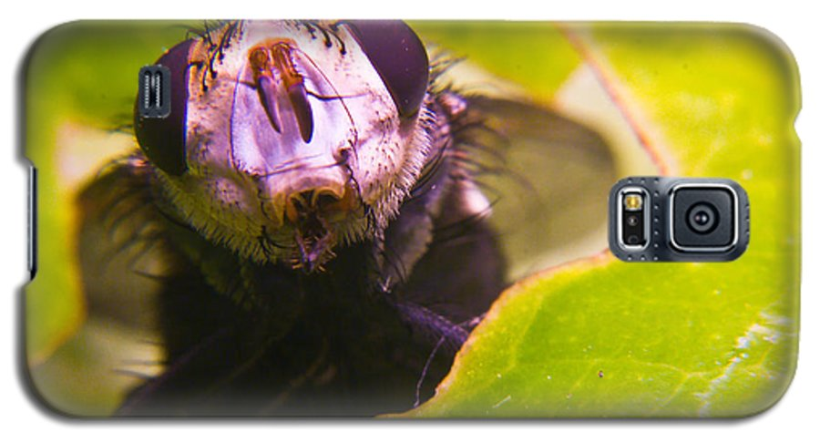 Fly Galaxy S5 Case featuring the photograph Hi There by Douglas Barnett