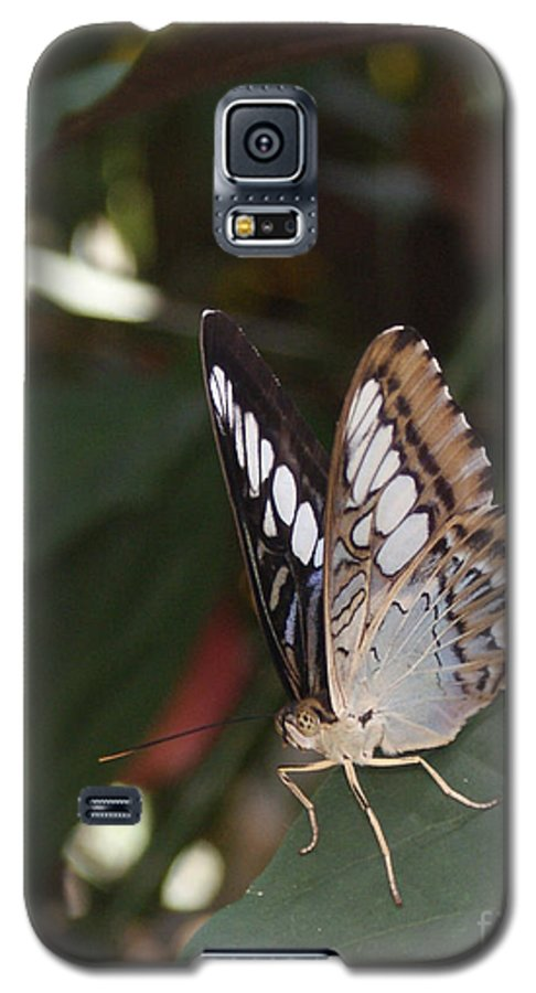 Butterfly Galaxy S5 Case featuring the photograph Hints Of Blue by Shelley Jones