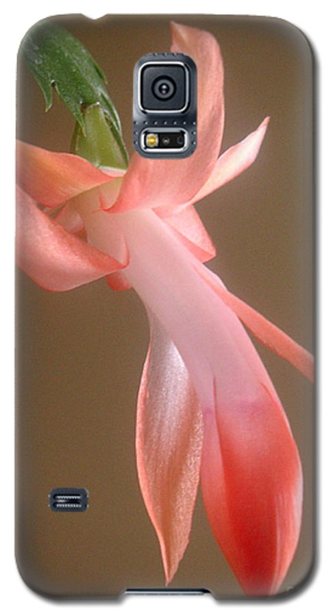 Nature Galaxy S5 Case featuring the photograph Holiday Cactus - In Day Light by Lucyna A M Green